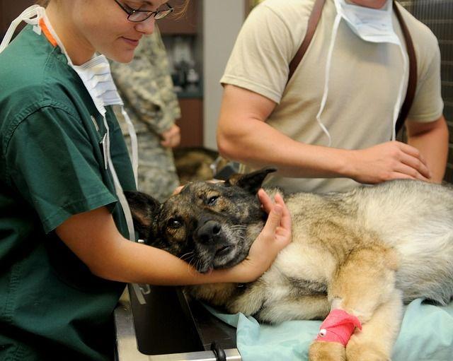 Visites de chiens en thérapie