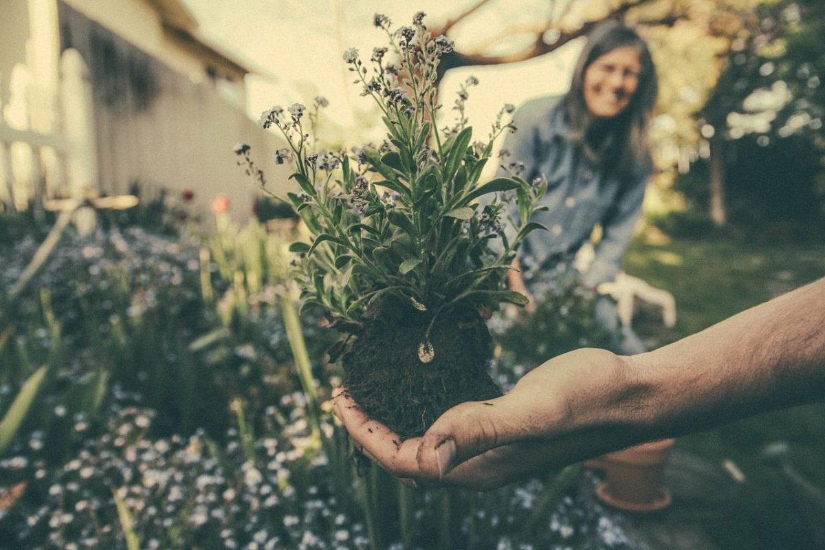 Pourquoi le jardinage est une bonne activité en vieillissant